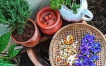 Cái vườn nhỏ xíu của mẹ ở bancông