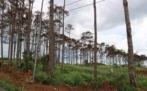 Bắt giam cán bộ ngân hàng thuê người đầu độc thông rừng để chiếm đất