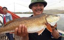 Câu được cá 7kg nghi cá sủ vàng trên sông Gianh