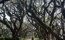 Khu rừng kỳ ảo ở miền 'Bình minh Java'