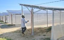 Xin làm nông nghiệp, làm luôn điện mặt trời 'chui'