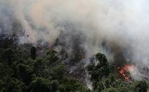 'Lá phổi hành tinh' Amazon đang cháy kỷ lục