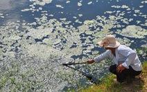 Dân bức xúc vì nhà máy bột cá gây ô nhiễm