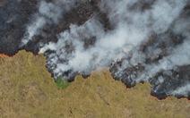 Thêm hơn 1.600 đám cháy mới tại Amazon, Brazil cấm đốt rẫy 2 tháng