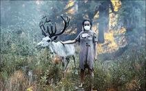 Cháy rừng, cáo đói chấp nhận gặm sôcôla