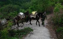 Video: Ngựa thồ vật liệu lên Vạn Lý Trường Thành để tu sửa theo cách truyền thống