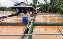Di dời hàng trăm hộ dân khỏi khu vực ngập lụt ven sông Đồng Nai