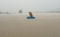 Phú Quốc đã hứng chịu đợt mưa 'hiếm gặp' tới gần 1.000mm