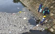 Cá chết trắng hàng tấn trên hồ Hòa Phú, Đà Nẵng