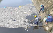 Video: Sau cơn mưa lớn, cá chết trắng hồ ở Đà Nẵng
