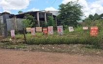 Bình Phước tạm dừng tiếp nhận hồ sơ tách thửa đất nông nghiệp