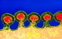 Các nhà khoa học Trung Quốc chỉnh sửa gen chữa HIV, ung thư máu