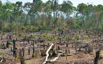 Khởi tố trưởng Ban quản lý rừng phòng hộ vì để đơn vị quân đội phá rừng, trồng cao su