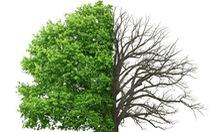 Cây rừng thải khí CO2 vì thời tiết quá nóng