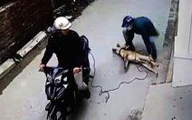 Bà con xứ Thanh ngẩn ngơ khi chỉ 1 đêm, 40 con chó bị 'cẩu tặc' bắt trộm