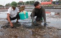 Sau cá, hàng trăm tấn ngao ở Hà Tĩnh chết trắng