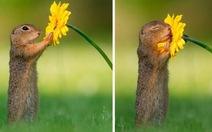 Khoảnh khắc 'siêu dễ thương' của động vật khi không có ai xung quanh