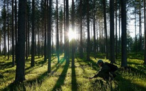 Trong một tối, dân Đan Mạch góp tiền trồng gần triệu cây xanh