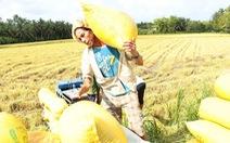 Chính sách trợ giá lúa gạo của Thái có ảnh hưởng đến Việt Nam?