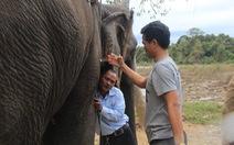 Đề xuất gắn chíp định vị cho voi hoang dã