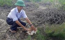 Dừng dự án điện gió chậm tiến độ 8 năm, để mất 140ha rừng