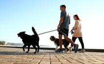 Bị phạt 2.700 USD nếu không dắt chó đi dạo mỗi ngày