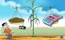 11 nông dân đi kiện lên tòa vì... lúa trổ bông không đều