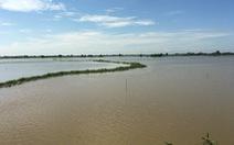 Lũ Campuchia cao nhưng khó ảnh hưởng đến Đồng bằng sông Cửu Long