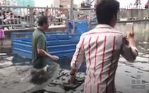 Video: Rung chấn ép cọc làm kè ngăn triều vỡ ở tuyến Bình Đông