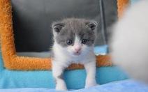 Củ Tỏi 'ngủm củ tỏi', doanh nhân 22 tuổi Trung Quốc chi 35.400 USD nhân bản mèo cưng