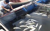 Cả trăm tấn cá nuôi chết trắng lồng ở Hà Tĩnh
