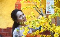 Đường hoa mai, phố ông đồ hút khách ở Lễ hội Tết Việt