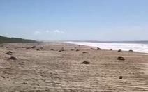 Hàng trăm con rùa xanh quý hiếm chết vì 'thủy triều đỏ'