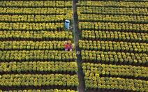 Từ flycam, làng hoa cạnh lò gạch cũ ở Cái Mơn đẹp ngẩn ngơ