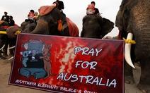 Voi Thái Lan buồn bã im lặng tưởng niệm động vật chết trong cháy rừng Úc