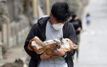 Thú cưng, gia súc, gia cầm được giải cứu và di tản vì tro núi lửa ở Philippines