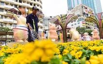 Hoa nội khoe sắc trên Đường hoa Nguyễn Huệ 2020