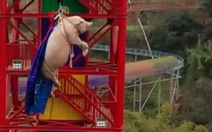 Công viên chủ đề tại Trung Quốc bị chỉ trích vì dùng heo tiếp thị trò nhảy bungee