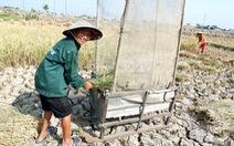 Gặt lúa giữa đồng trưa 27 tết, vợ chồng già cười 'tặng cả mùa xuân'