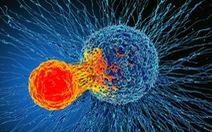 Phát hiện cơ chế miễn dịch 'có thể điều trị mọi loại ung thư'