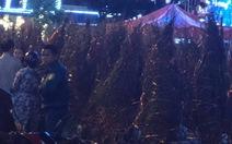Video tối 30, nhiều người bán đào tự chặt bỏ những gốc đào vì ế