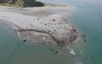 Cả ngàn người già trẻ, trai gái khẩn cấp cứu 11 cá voi mắc cạn
