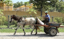 Những chiếc xe ngựa cuối cùng ở Bảy Núi