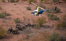 'Chuyển nhà' cả ngàn cây số cho voi