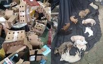 5.000 thú cưng 'đặt mua qua mạng' chết trong thùng cáctông ở Trung Quốc