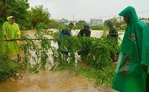 Đà Nẵng di dời gần 1.000 hộ dân tránh lũ