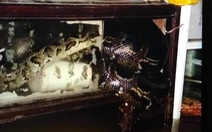 Cả nhà ở rốn lũ Quảng Trị không dám ngủ khi thấy trăn bò vào nhà