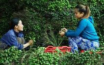 Nhộn nhịp mùa cau ở Tiên Phước, Quảng Nam