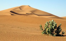 Kỳ lạ khi phát hiện có 1,8 tỉ cây xanh ở 'vùng đất chết' Sahara