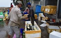 Lo bão lũ, người dân chịu lỗ bán tháo cá nuôi lồng bè